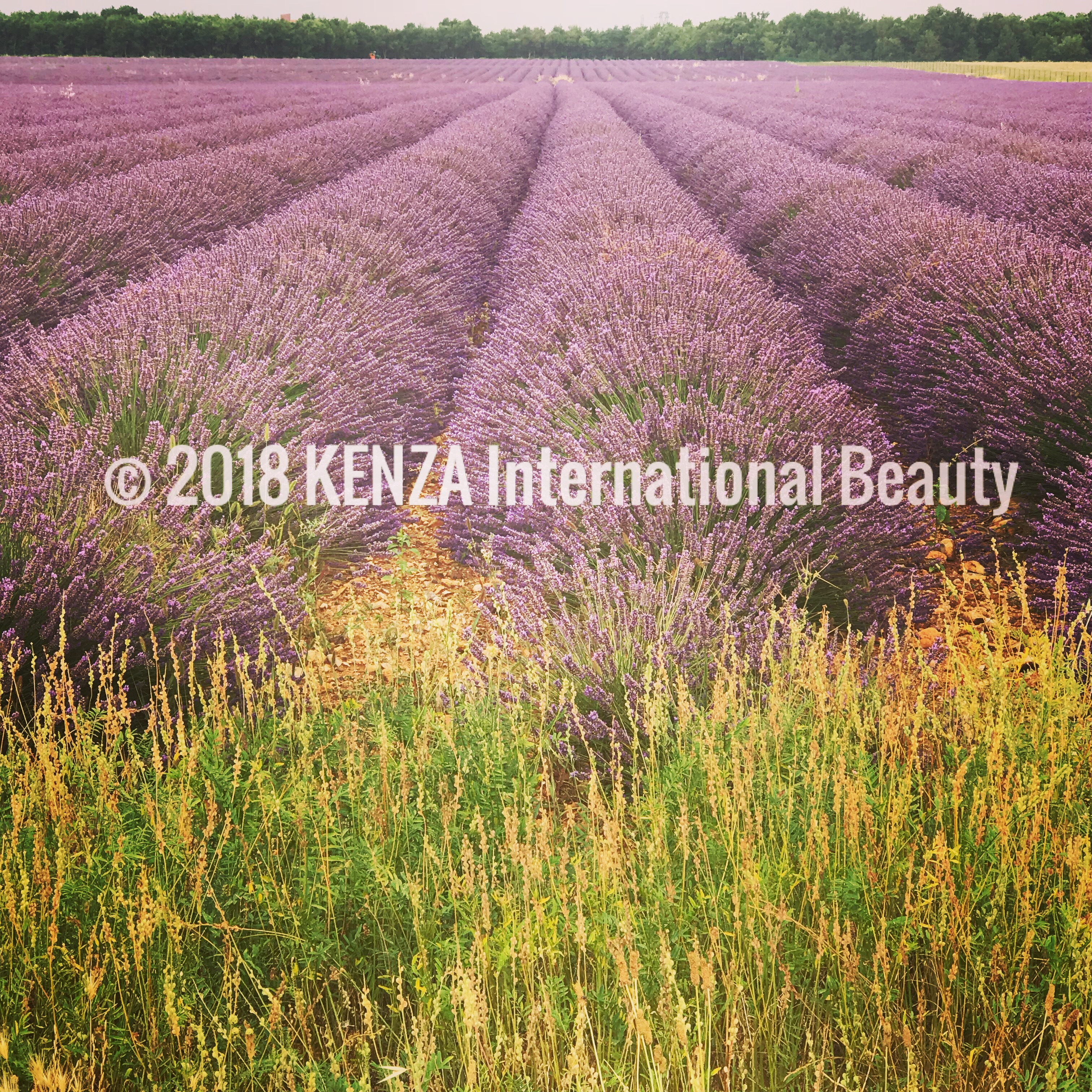 Lavender field Valensole ©2018 KENZA International Beauty (25)