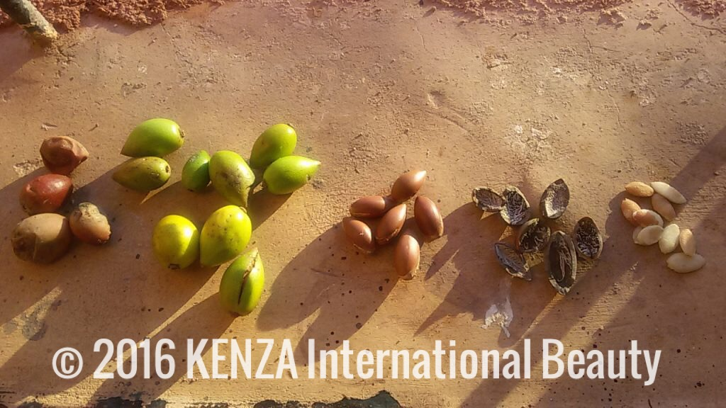 Argan nuts Atlas Kasbah © 2017 KENZA International Beauty