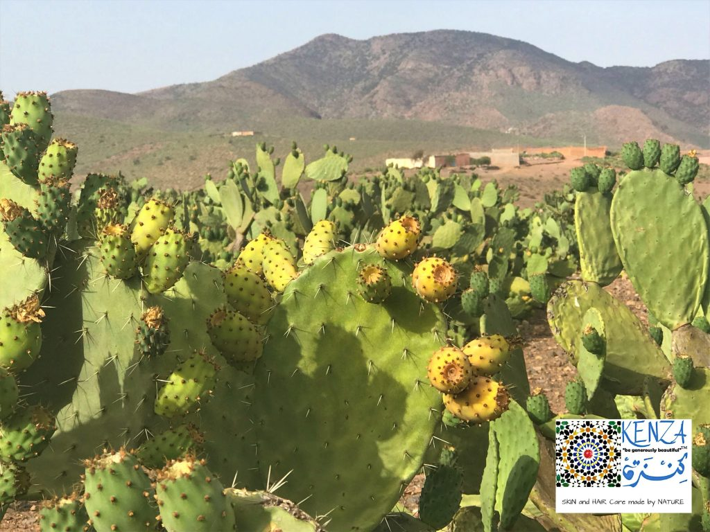 Prickly Pears Morocco 2019