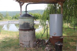 Helychrisum Provence 2017 (9)
