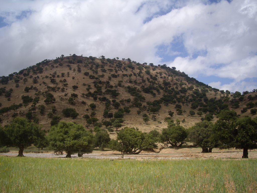 Argan Road (6)